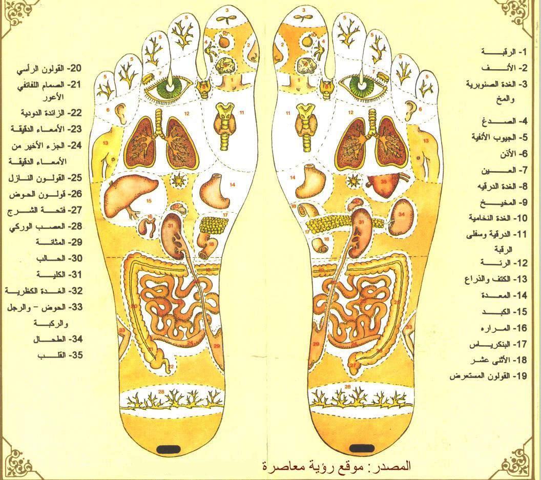 كتاب الطب النبوي والتداوي بالاعشاب pdf